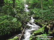 catherinehopkinsncwaterfallrev6x8wm.jpg